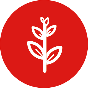 Groei icoon